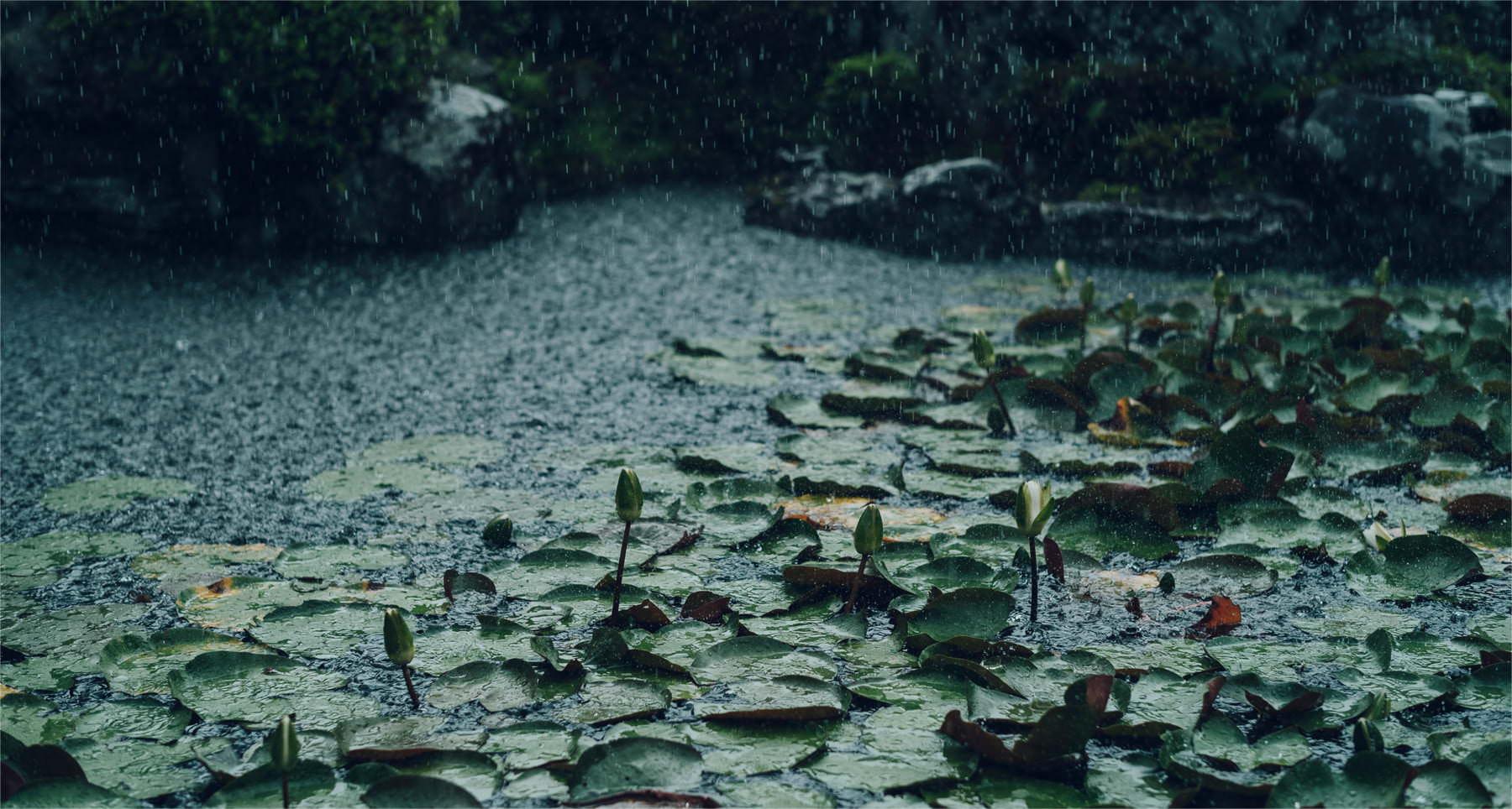 Jojuin garden in misty rain